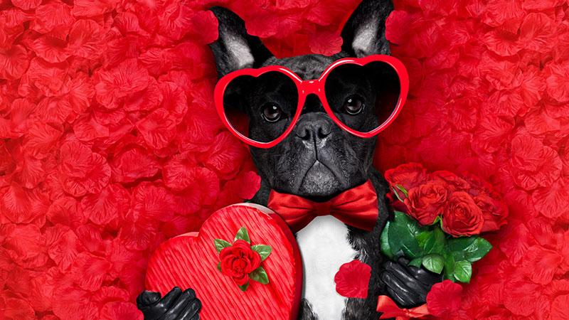 Mr. Szerelem kutya formában